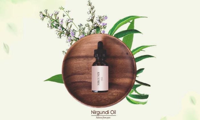 All About Nirgundi Oil